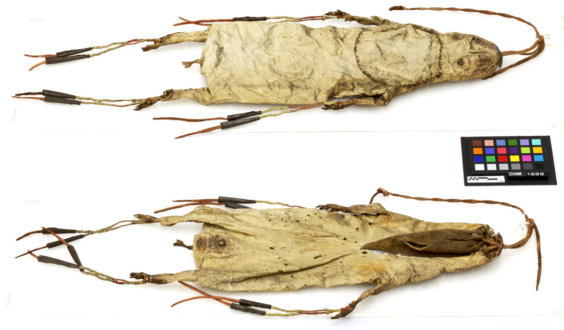 Dorsal and Ventral View of Muskrat Bag