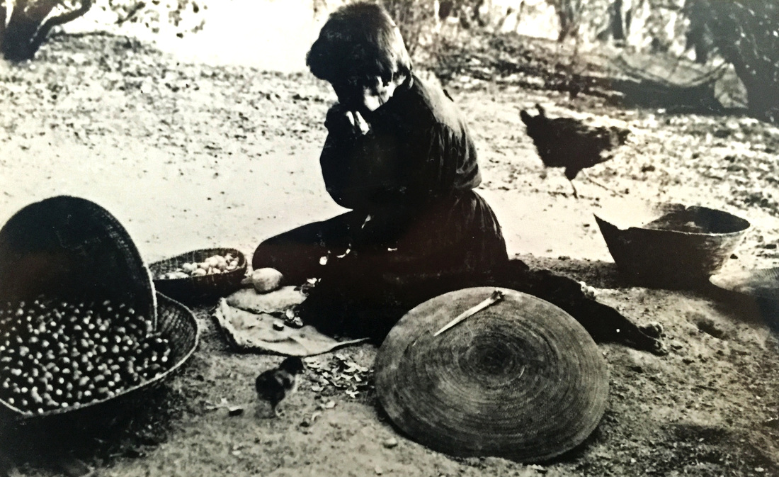 Historic picture of Chukchansi woman Chalakit in 1902, splitting acorns with teeth with baskets around her